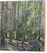 Florida Riverbank  Wood Print