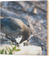 Florida Scrub Jay Breakfast Time Wood Print