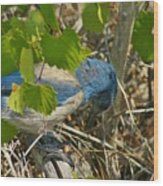 Florida Scrub Jay Opens Acorn Wood Print