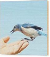 Florida Scrub Jay Takes A Taste Wood Print