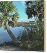 Florida Shade Trees Wood Print