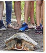 Florida Softshell Turtle 003 Wood Print