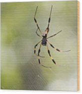 Florida Spider Wood Print