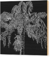 Florida Thatch Palm In Black And White Wood Print