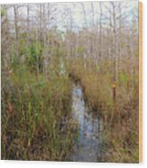 Florida Trail Big Cypress Wood Print