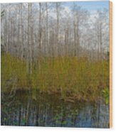 Florida Wilderness Wood Print