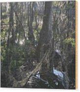 Florida Winter Wood Print