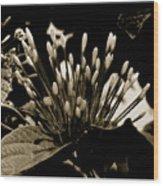 Florita Wood Print