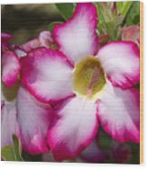 Flower 12 Pink White Yellow Wood Print