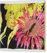 Flower 23af, Ny, 16 Wood Print