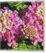 Flower 23f, Ny, 16 Wood Print