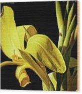 Flower 29f, Ny, 16 Wood Print