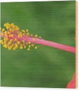 Flower 5 Wood Print
