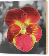 Flower 5 - Reverse Black And White Wood Print