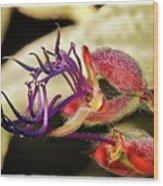 Flower 55f, Ny, 16 Wood Print