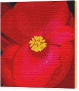 Flower 8 Enhanced Wood Print