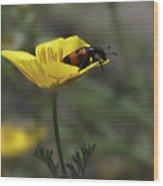 Flower And Bug Wood Print