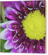 Flower And Droplets Wood Print