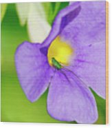 Flower And Grasshopper-st Lucia Wood Print