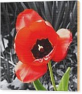 Flower As Art Wood Print