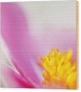 Flower Beauty Wood Print