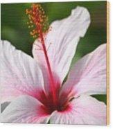 Flower Beauty2 Wood Print