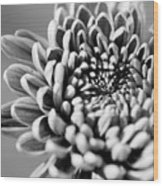 Flower Black And White Wood Print