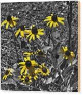 Flower Black Eyed Susan Wood Print