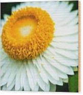 Flower Blossom 3 Wood Print