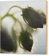 Flower Buds Abstract Wood Print