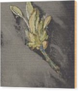 Flower, Carel Adolph Lion Cachet, 1874 - 1945 Wood Print