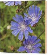 Flower Chicory Wood Print