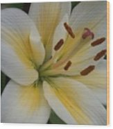 Flower Close Up 1 Wood Print