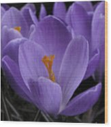 Flower Crocus Wood Print