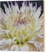 Flower Dahlia. Macro Wood Print