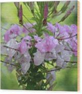 Flower Dew Beauty Wood Print