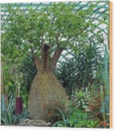 Flower Dome 6 Wood Print