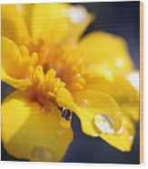 Flower Droplets Wood Print