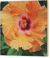 Flower Explosion2 Wood Print