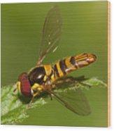 Flower Fly Allograpta Obliqua Wood Print