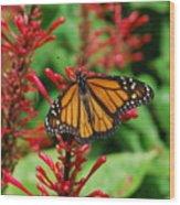 Flower Fly Wood Print