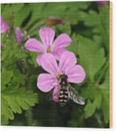 Flower Fly On Stinky Bob Wood Print