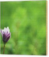 Flower Front Of Blur Background. Wood Print