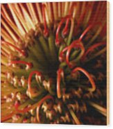 Flower Hawaiian Protea Wood Print