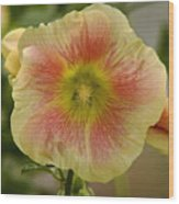 Flower Head Wood Print