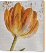 Flower - Id 16235-142750-0708 Wood Print