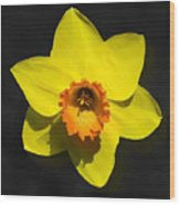 Flower - Id 16235-220251-6209 Wood Print