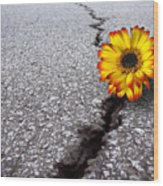 Flower In Asphalt Wood Print