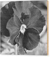 Flower In Garden Wood Print