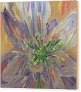 Flower In Morning Light Wood Print